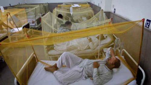 Dengue fever outbreak sets a new record