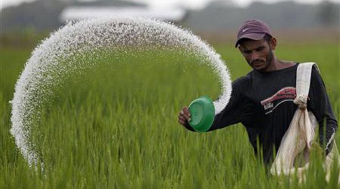 Fertiliser prices set to reduce by Rs390/bag in Rabi season