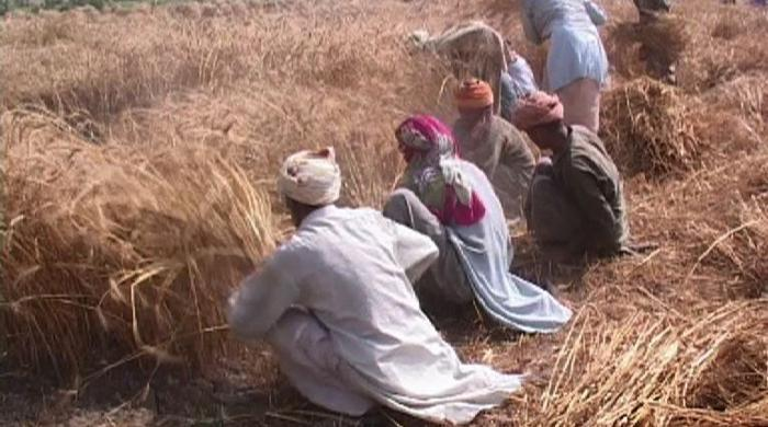 Smartphones for Punjab farmers