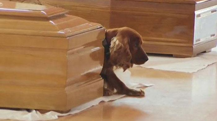 Loyal dog refuses to leave his dead master's side after Italy earthquake