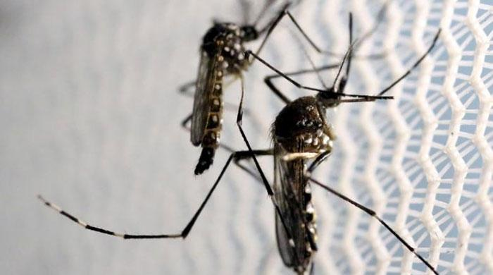 Thirteen Indians among Zika infected people in Singapore: source