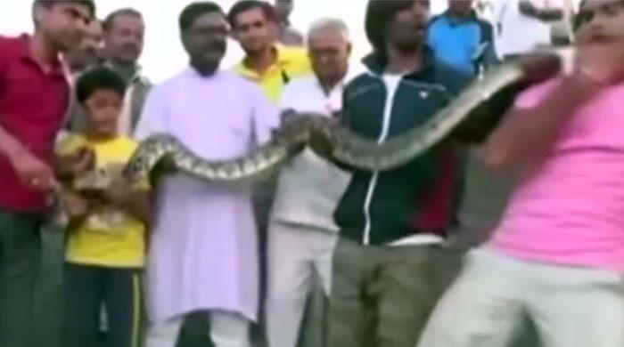 Indian man bitten by python whilst posing for selfie