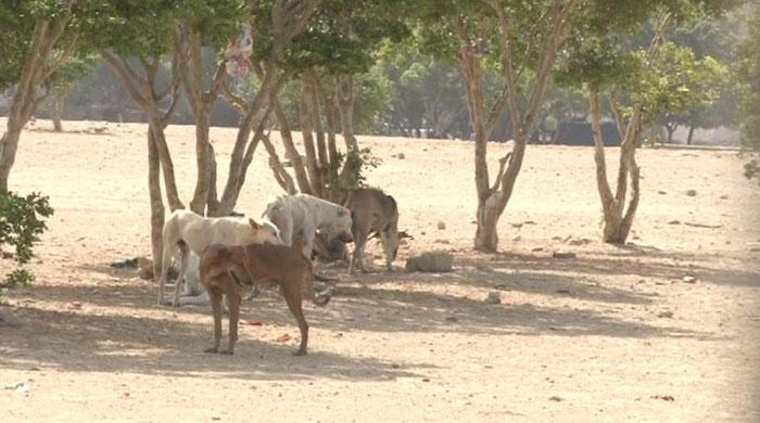 World Rabies Day: 6,000 cases reported in Karachi every year
