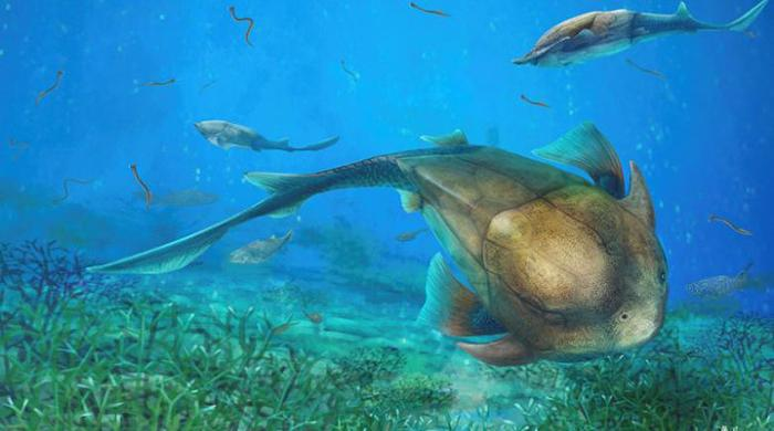 Chinese fish fossil sheds light on jaw evolution