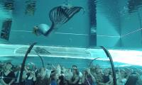 Video: Beautiful Mermaid From World's Deepest Pool