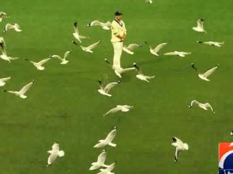 Special Report - Watch this army of seagulls take over Melbourne Cricket Ground 27-October-2016