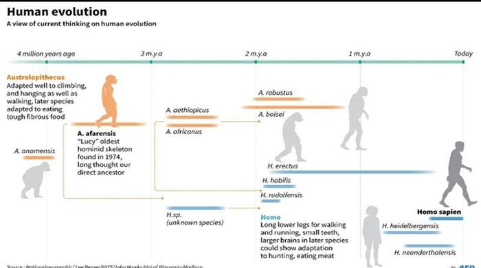 Human ancestor Lucy spent much of her time in trees: study