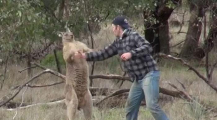 WATCH: Man punches kangaroo to save pet dog