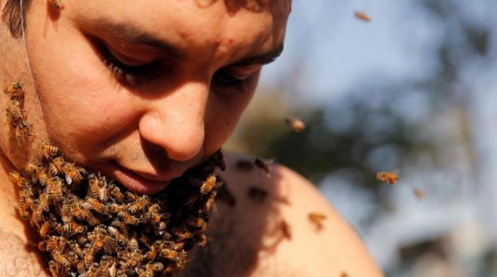 Egyptian man grows 'Beard of Bees', hopes to promote apian benefits