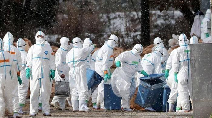 Taiwan confirms a new bird flu case, 4th this year