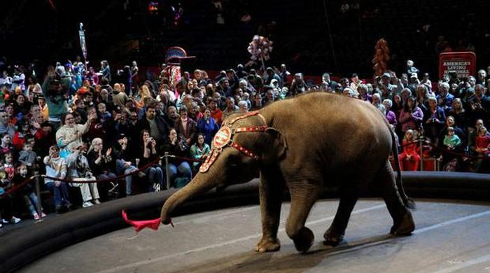 Ringling Bros. circus folds its tent after nearly 150 years