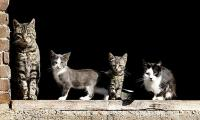 Hundreds of cats quarantined in New York City bird flu outbreak