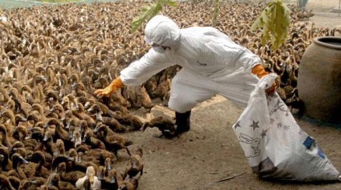 Czechs cull up to 20,000 poultry as bird flu outbreak spreads