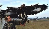Born killers: French army grooms eagles to down drones