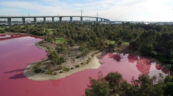 Aussie lake turns vivid pink