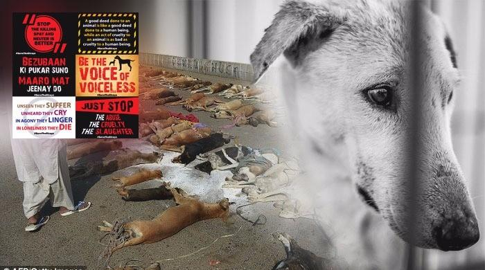Animal-lovers to protest dog culling at Karachi Press Club today