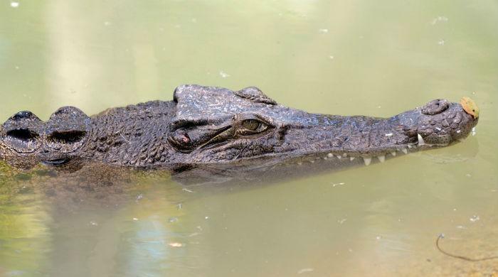 Mozambican footballer killed in crocodile attack