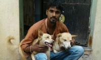 Two stray dogs help chase down criminal in India