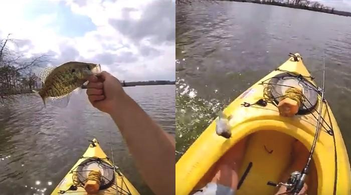 Clingy fish leaps back into boat to fisherman's surprise!