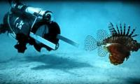 Robots, chefs hope to bring invasive lion fish to restaurants near you