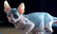 'Shaving Cats!!??' Virginia police probe seven pet abductions