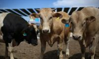 Mexican beef exporters look to Muslim markets as US alternatives