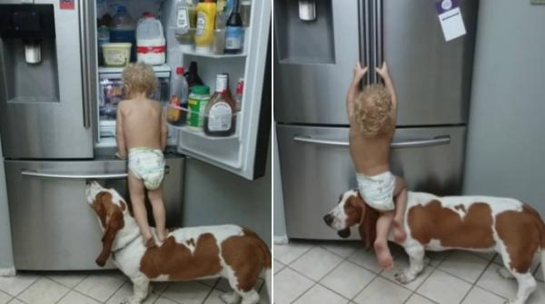 Video of dog helping toddler open fridge goes viral