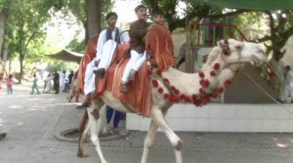 Children throng to Lahore Zoo to enjoy Eid