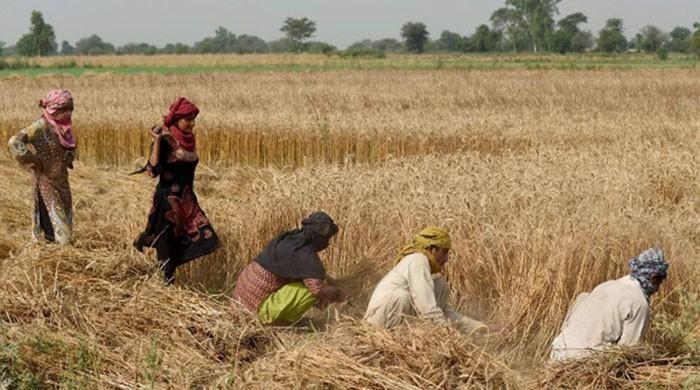 First loans to farmers with crop as collateral disbursed