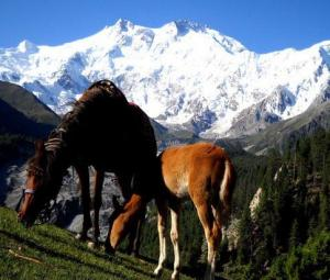 The budget backpack: Planning a trip to Pakistan's Fairy Meadows