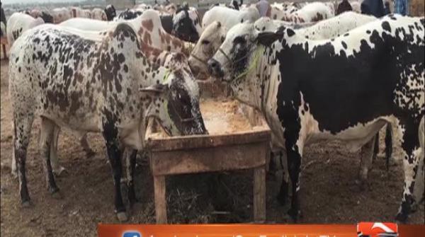 Eidul Azha preps: Set-up of Asia's biggest cattle market in Karachi under way 22-July-2017