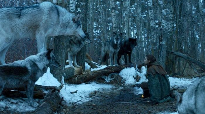 Arya's bittersweet reunion with her direwolf explained by GoT creators