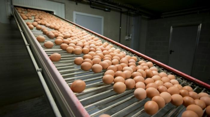 Belgium accuses Netherlands of tainted eggs cover-up