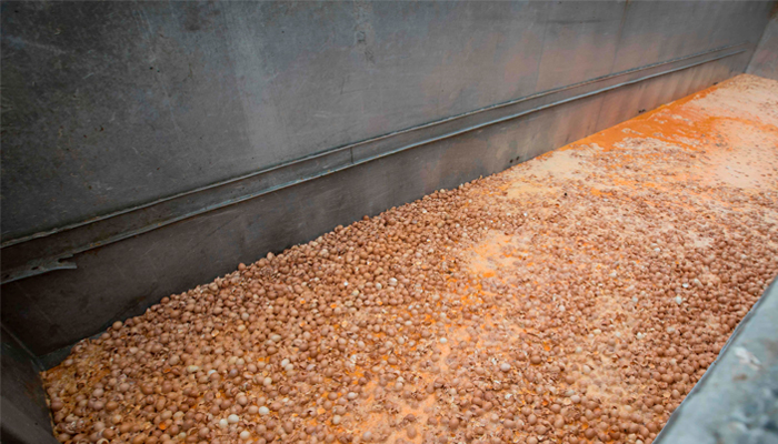 Eggs are destroyed at a chicken farm in Nadrin Houffalize