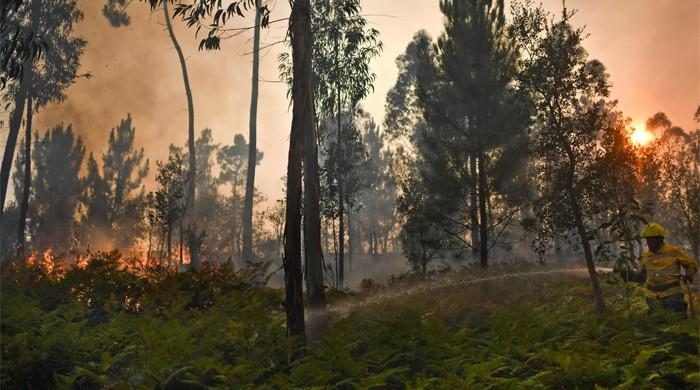 Portugal arsonists feed wildfire destruction