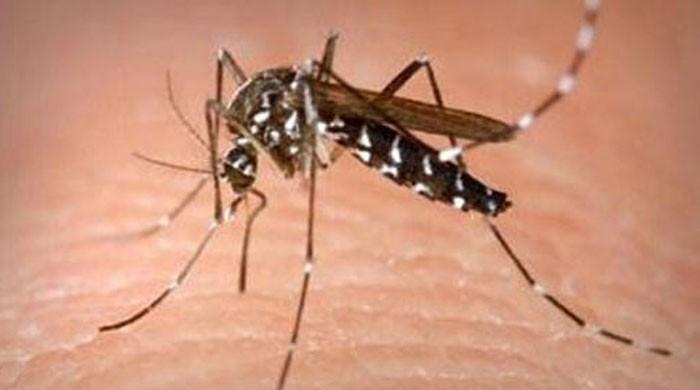 Health teams from Punjab reach Peshawar to 'fight' dengue