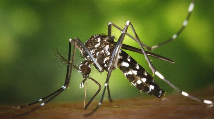 Rome sets mosquito campaign after chikungunya cases