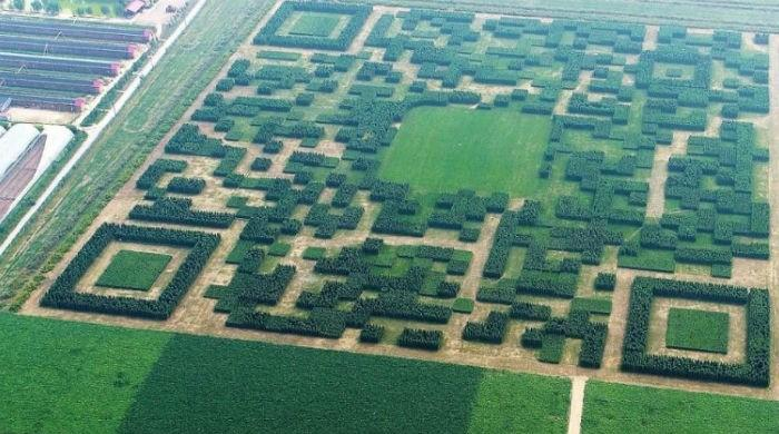 Villagers make a giant tech code using trees in China