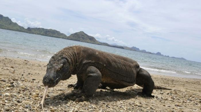 Biggest and smallest creatures at top risk of extinction: study