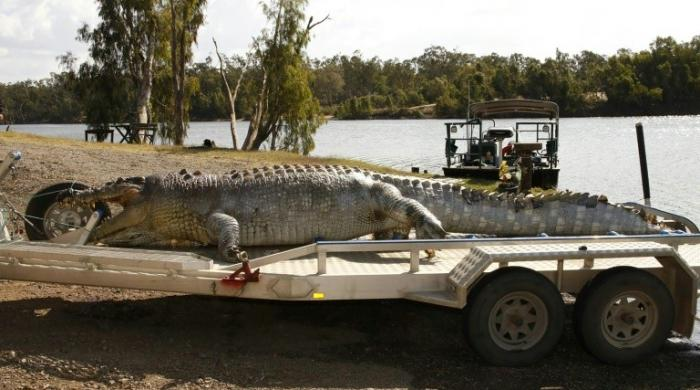 Australian police hunt killer of 'giant croc'