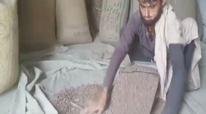 South Waziristan political admin lifts ban on pine nuts distribution across country