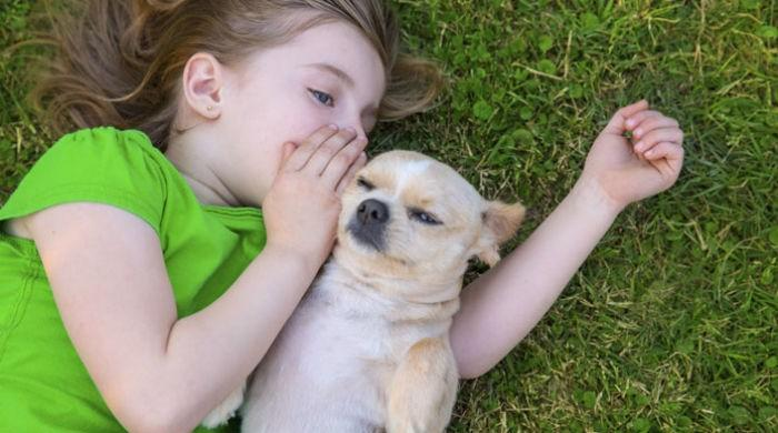 Pet dogs help kids feel less stressed: study