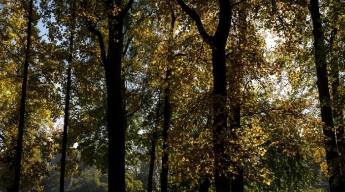 More trees, better farming could slash carbon emissions: study