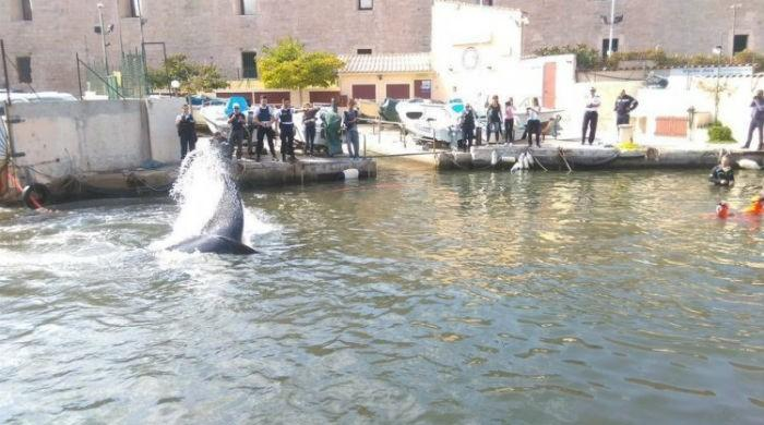 Confused whale blocks Marseille marina