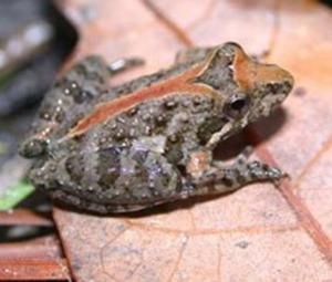 Turkey frees 7,500 illegally hunted frogs into river