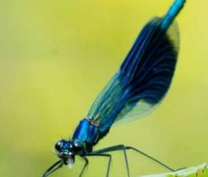 Insects decline dramatically in German nature reserves: study