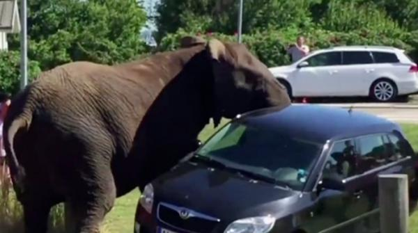 Angry elephant overturns car