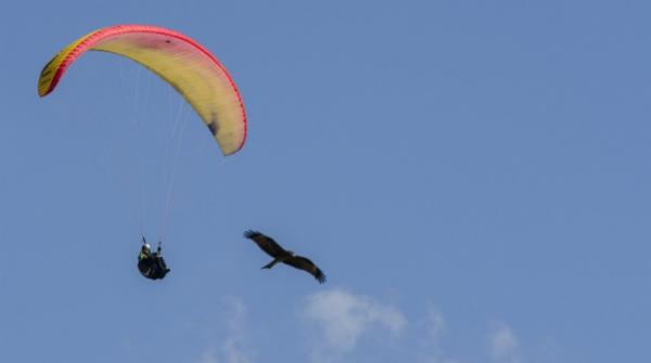 Watch the precision skills of this paraglider