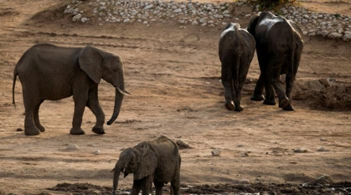 Trump reverses elephant trophy decision, keeps ban