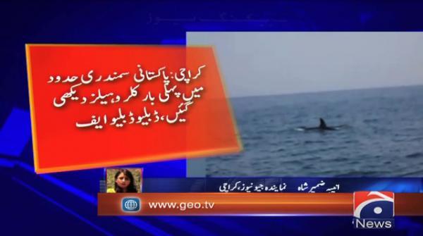 Whale shark spotted near Karachi harbour